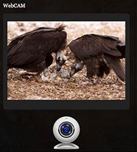 webcamvoltors